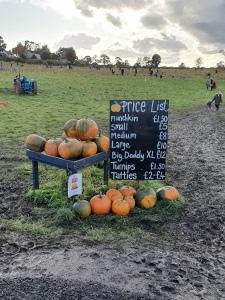 Arnprior-pumpkins-price-list